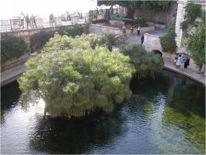 世界遺産シラクーサ アレトゥーサの泉