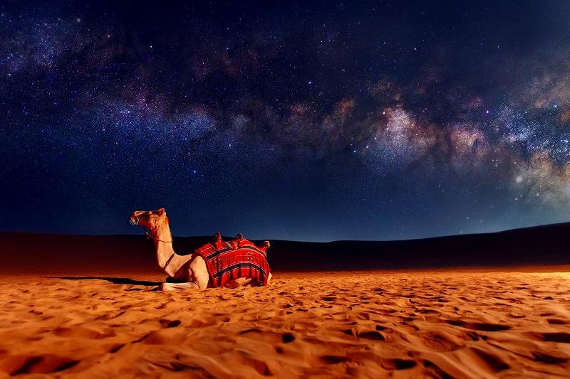 ドバイ 砂漠のラクダ